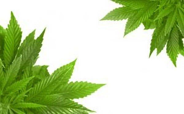 La Marijuana