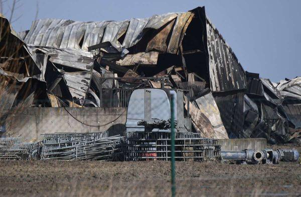 Brand  in Mecklenburg-Vorpommern: 57.000 Schweine verenden bei Feuer im Stall
