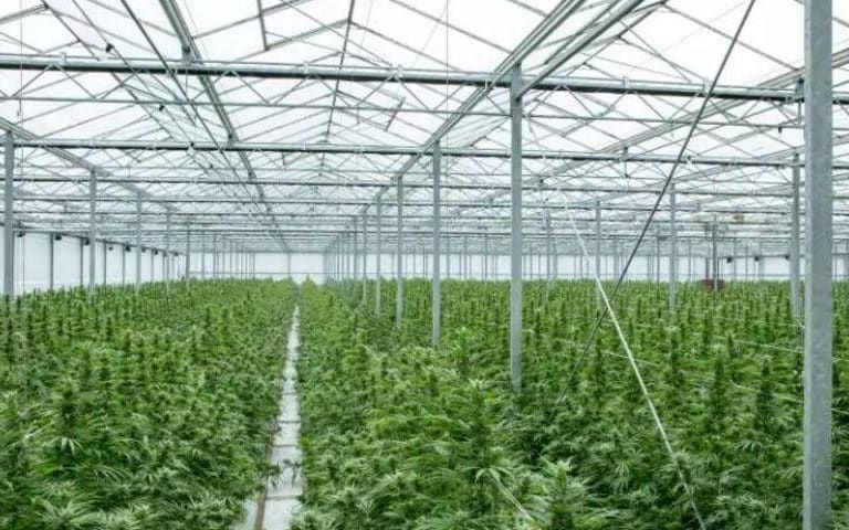 UK set for cannabis boom as GW Pharma storms ahead