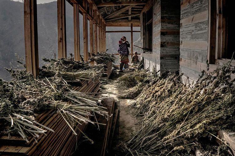 This peaceful village overlooks the world's most spectacular mountainside marijuana grow-op