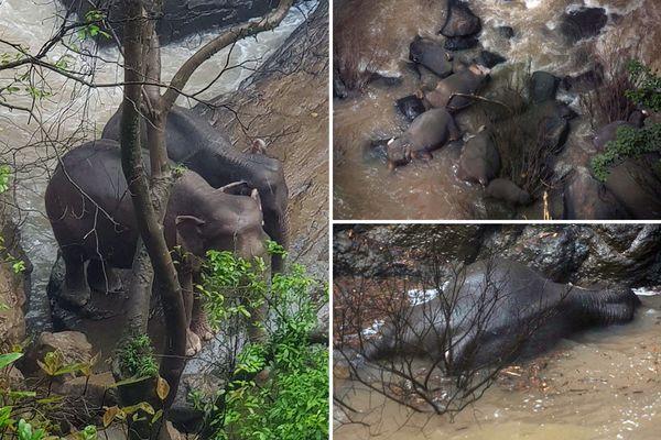 Waterfall in Hell elephant ile ilgili görsel sonucu
