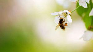 I rimedi naturali per allontanare api, vespe e calabroni senza danneggiare l'ambiente