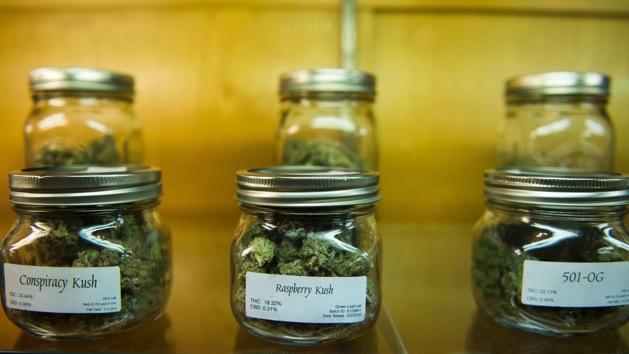 What is the future of recreational marijuana in Trump's America?