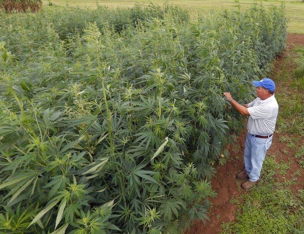 Hemp Is Set To Overtake The Production Of Tobacco In Kentucky | The Galactic Free Press