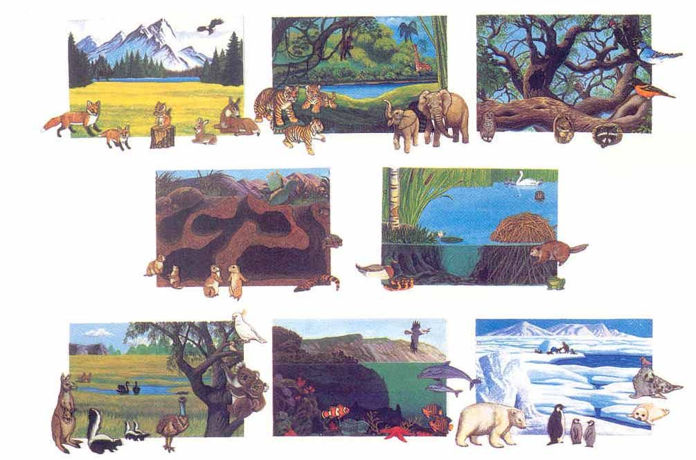 Image result for animals from different habitats