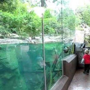 (ВИДЕО) Момче си играло пред аквариум во зоолошка градина: Никој не очекувал дека ова ќе се случи
