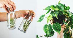 「辦公桌植物」推薦這5種!「翡翠木」招財好運來,「非洲堇」一年四季都開花!