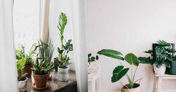 新手種植怎麼挑植物?先從這4大「懶人系園藝」多肉植物開始吧!