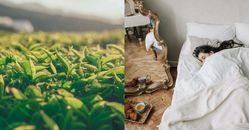 綠茶養顏美容又遠離癌症!多喝綠茶的5大功效,2杯綠茶就等於跑步10分鐘,還能順便固牙齒