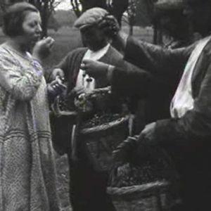 Geheugen van Nederland zoekt digtaal (AV-) erfgoed rond het thema 'Eten en drinken'
