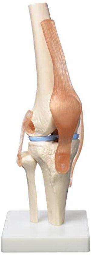 Cheap Patterson - Articulación para rodilla Con Descuento