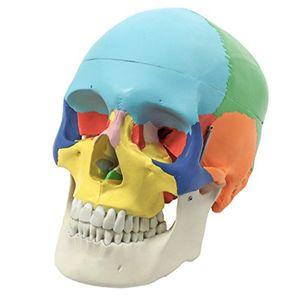 ofertas para - s242134 craneo humano didáctica coloreado 3 piezas