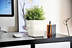 deals for - catmotion selbstbewässernder design blumentopf mit wasserstandsanzeige water level indicator für alle pflanzenarten kräuter orchideen blumen einfaches züchten greensun 13 x 13cm weiß