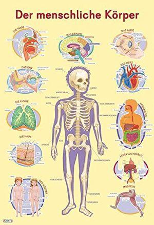 Angebote für -mein lernposter der menschliche körper