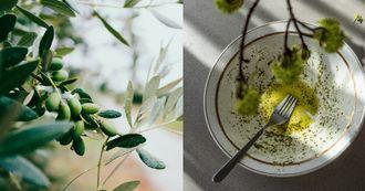 「橄欖油」比較健康嗎?4重點了解如何挑選、使用,「特級初榨」不適合快炒油炸、「這款」煎煮炒炸都適合!
