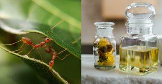 螞蟻怕什麼?5種天然驅蟻妙招大公開,「咖啡渣」保護盆栽不受入侵,「胡椒粉+醋水」效果拔群!
