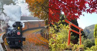 楓葉季來了!盤點全台5大絕美聖地:福壽山「松盧」秒飛日本,杉林溪同場加映金黃水杉林