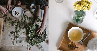 花草茶推薦這7種!「薰衣草」用喝的可降低抑鬱,這杯「植物界紅寶石」女性必喝