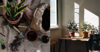 植物換盆步驟大公開!「這情況」暫時還不需要搬家,根系修剪不當、盆器過大很致命!