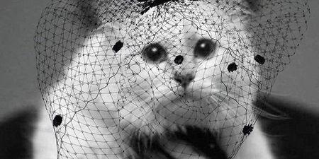 Τι ανέβασε η γάτα του Karl Lagerfeld στο Instagram;
