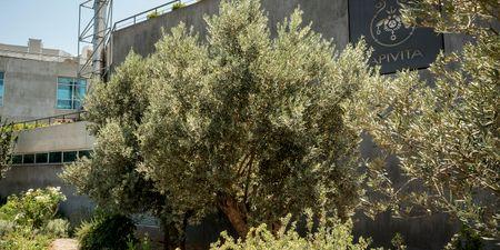 Γιορτάζουμε την Ημέρα Περιβάλλοντος με ένα νέο βοτανόκηπο στην καρδιά της Αθήνας