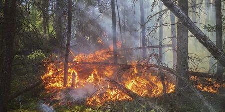 Ολοκληρωμένος, απλός, οδηγός επιβίωσης από δασική πυρκαγιά