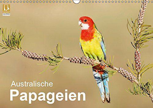 photo Wallpaper of CALVENDO-Australische Papageien (Wandkalender 2019 DIN A3 Quer): Erstklassige Fotografien Von Australischen Papageien (Monatskalender,-