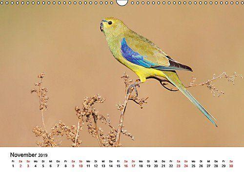 photo Wallpaper of CALVENDO-Australische Papageien (Wandkalender 2019 DIN A3 Quer): Erstklassige Fotografien Von-