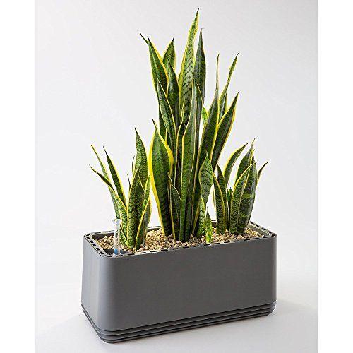 photo Wallpaper of AIRY-AIRY Box   Innovativer Pflanzentopf Als Hochwirksamer Luftreiniger   Natürliche Luftreinigung-Stone Grey