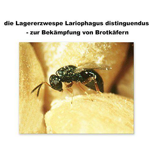 photo Wallpaper of BiP-Brotkäfer Giftfrei Mit Der Lagererzwespe In Der Küche Bekämpfen Biologische Brotkäferbekämpfung-