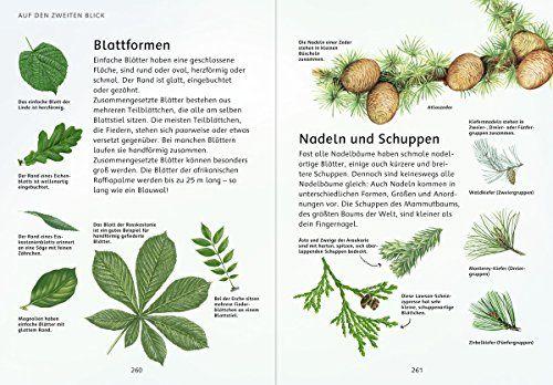 photo Wallpaper of -Mein Natur Erlebnisbuch: Entdecke Und Erlebe Die Natur-