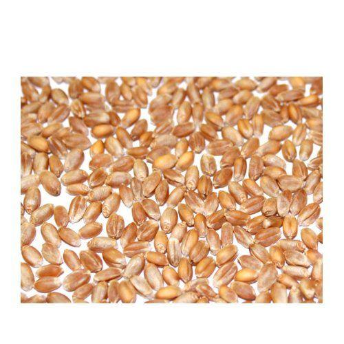 photo Wallpaper of Biolandhof Knauf-BIO Weizen 5kg   Direkt Vom Bauernhof   Aus Kontrolliert-