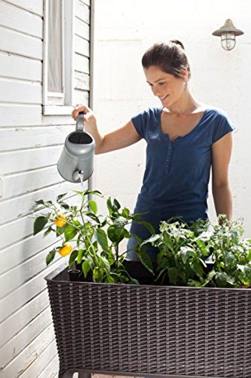 photo Wallpaper of Keter-Keter Kunststoff Hochbeet Easy Growing, Rattan Hochbeet, Anthrazit-braun