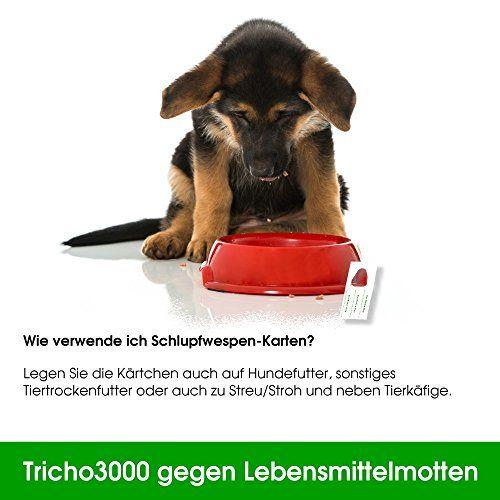photos of Schlupfwespen Gegen Lebensmittelmotten, 3000 X 4 Stück Heute Deals Kaufen   model Lawn & Patio