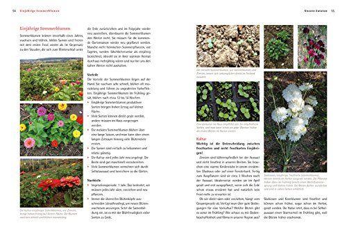 photo Wallpaper of Löwenzahn-Bio Schnittblumen Aus Dem Eigenen Garten: Die Besten Anbautipps Und Die-