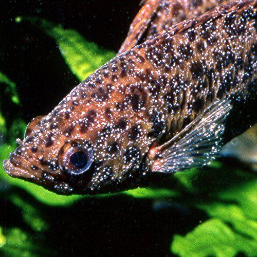 photo Wallpaper of JBL-JBL Punktol Plus 125 Heilmittel Gegen Pünktchenkrankheit Für Aquarienfische, 100 Ml-
