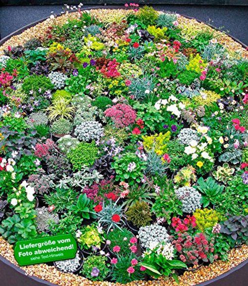 photo Wallpaper of BALDUR Garten-BALDUR GartenSteingarten Stauden Mix 10 Pflanzen Winterhart-