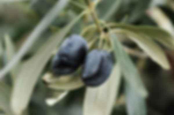 Какое на вкус некачественное оливковое масло. Фото: Леонид Терещенко