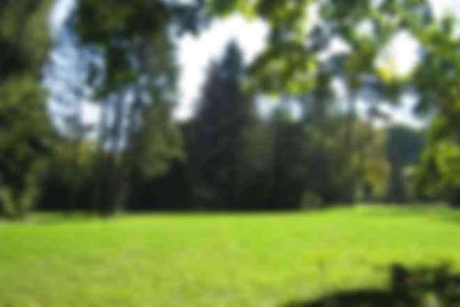 Куда поехать на выходные: дендрологический парк Тростянец