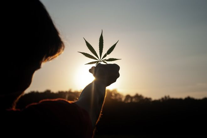 Medical cannabis may be legalized in Ukraine at the beginning of 2021. Photo: unsplash/@daconja