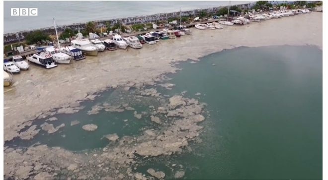 Мраморное море покрылось слизью. Фото: скриншот