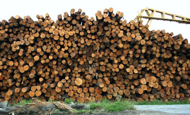 Мінекономіки запропонувало дозволити експорт лісу-кругляка. Фото: Pixabay