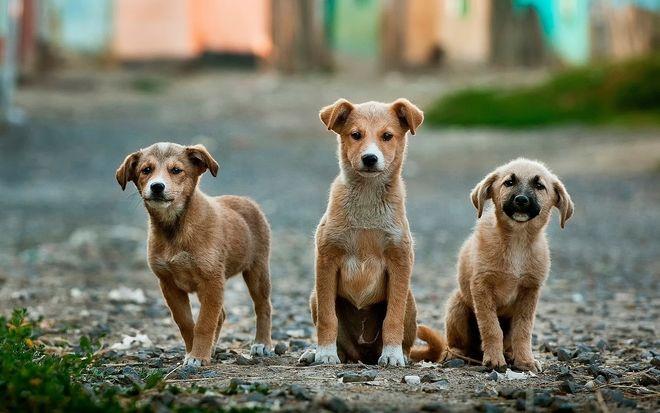 США заборонили собак з України: хто зможе обійти обмеження. Фото: pixabay