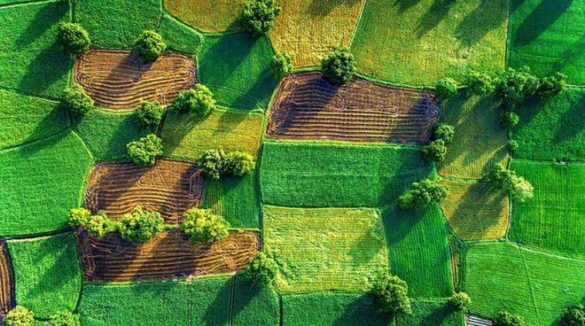 Рынок земель сельскохозяйственного назначения начал работать 1 июля. Фото: Latifundist