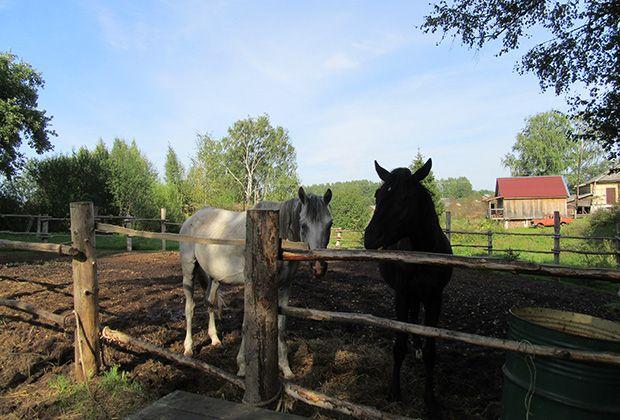 В Украине общины получили право управлять землями в пределах собственной территории. Фото: Алсу Гузаирова и Елена Маноли