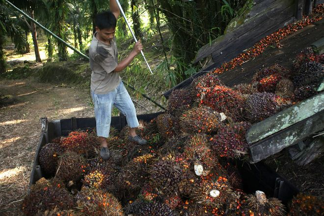 Дефіцит пальмової, соєвої, ріпакової та соняшникової олій: причини та прогнози. Фото: Flickr