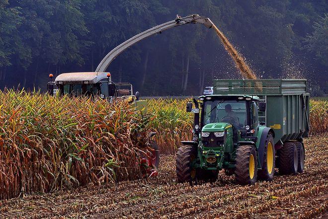 Из-за взлета цен на газ подорожала сушка зерна. Аграрии откладывают поставки на рынок. Фото: Pixabay
