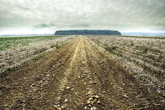 Самая высокая средняя цена гектара земли в Киевской области – 120,3 тыс. грн. Фото: Pixabay